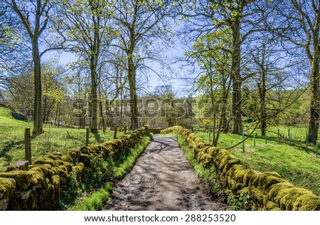 English Country lane in dappled sunlight. - stock photo