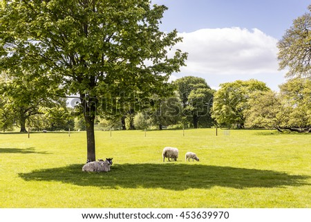 English countryside scene with sheep and new lambs. - stock photo