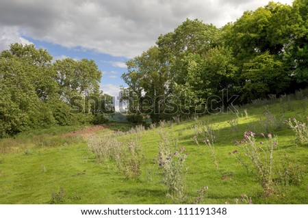 English countryside with oak trees and thistles - stock photo
