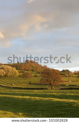 English countryside with sheep at sunset - stock photo