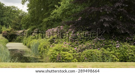 english garden with Rhododendron plants and flowers - stock photo