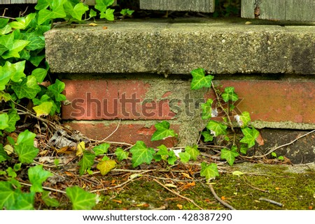English ivy encroaches on brick work of low wall, contributing to its deterioration - stock photo