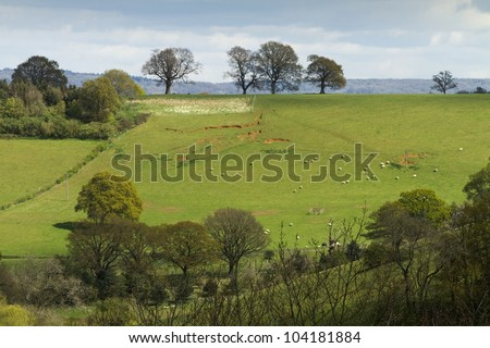 English landscape of fields and trees on a hill.  There are sheep in the field and it was taken in early spring before the trees are covered in leaves.  Taken in Surrey, England. - stock photo