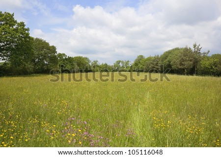 english landscape with a traditional hay field full of wild flowers and grasses surrounded by trees under a cloudy summer sky - stock photo