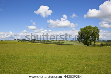 english landscape with rolling farmland of the yorkshire wolds in summertime under a blue sky with white fluffy clouds