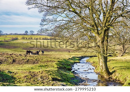 English rural scene with a stream and bare tree - stock photo