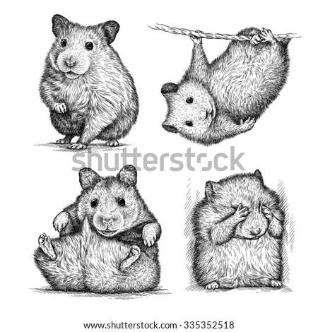 outlines of animals with fur stock photos images pictures shutterstock. Black Bedroom Furniture Sets. Home Design Ideas