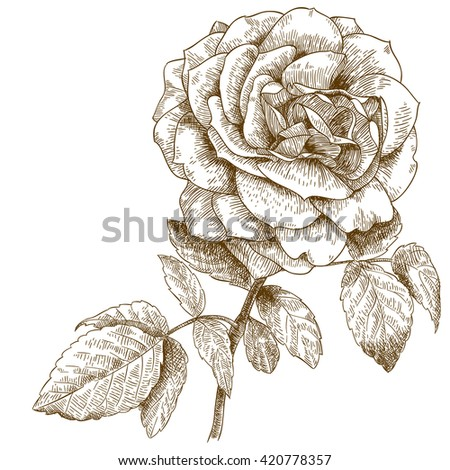 Rose Engraving Stock Images Royalty Free Images Vectors