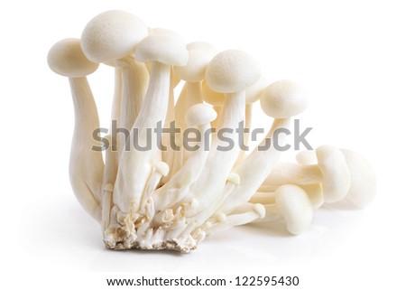 Enokitake mushrooms on a white background - stock photo