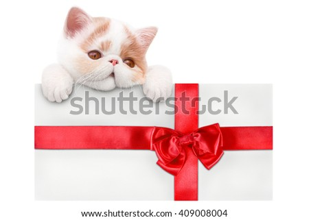 envelope with red bow and a kitten on a white background - stock photo