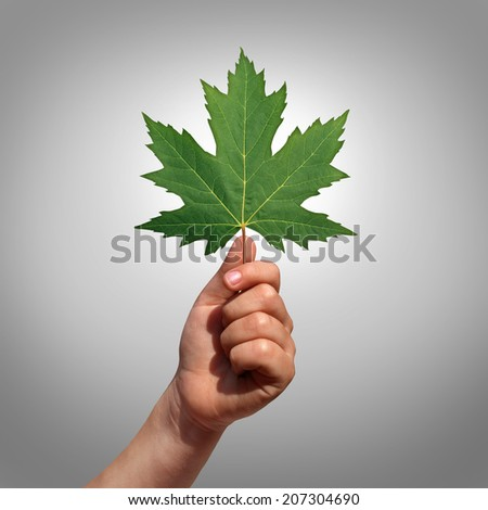 Environment hope symbol with a child hand holding a leaf as a concept of growth and development with the hand lifting a green maple leaf as a metaphor for learning discovery and imagination. - stock photo