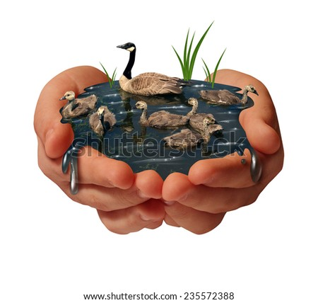 Environment protection and environmental conservation concept as human hands holding a family of geese on the water as an ecology symbol of the fragility of fauna due to to shrinking habitat. - stock photo