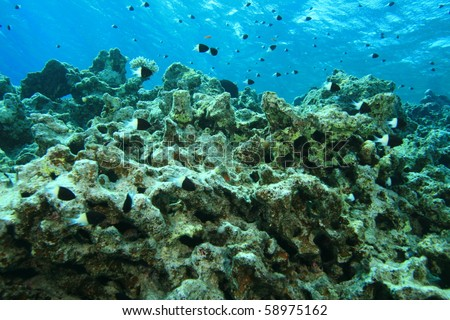 Environmental problem: dead coral reef killed by global warming and pollution - stock photo