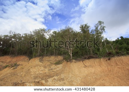 Environmental problems: destruction of tropical jungle rain forest for construction  - stock photo