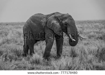 Elephant Face Photography