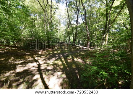 Epping Forest - Essex