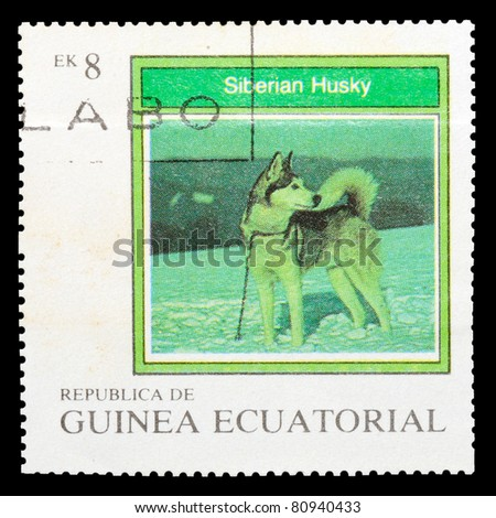 EQUATORIAL GUINEA - CIRCA 1977: A stamp printed by EQUATORIAL GUINEA shows a dog Siberian Husky, series, circa 1977 - stock photo