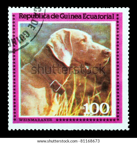 EQUATORIAL GUINEA - CIRCA 1978: A stamp printed by EQUATORIAL GUINEA shows a dog Weinmaraner, circa 1978 - stock photo
