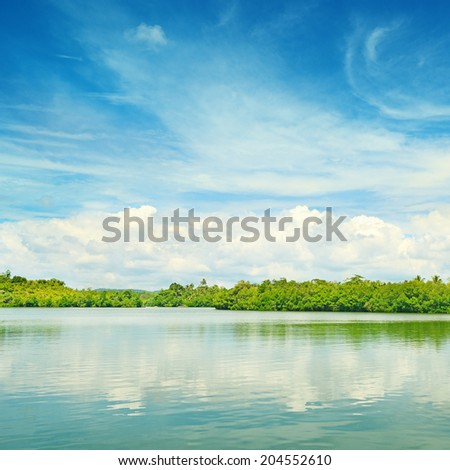 Equatorial mangroves in the lake                                     - stock photo