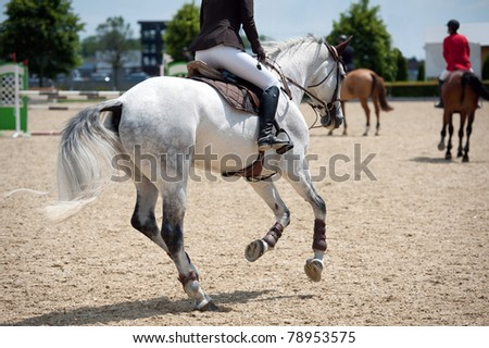 Equestrian horse theme - stock photo