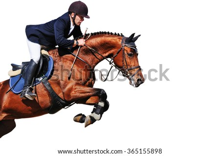Equestrian: rider with bay horse in jumping show, isolated on white background