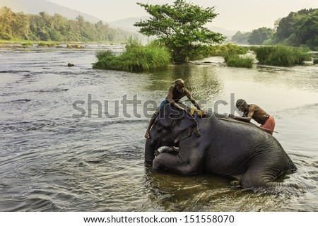 ERNAKULUM, INDIA - JANUARY 11: Bathing an elephant at dawn in the river Periyar  on 11 January, 2012 en route to Munnar from Ernakulum, Kerala, South India. - stock photo