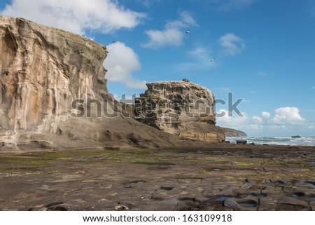 eroded cliffs at Muriwai
