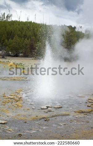 Eruption of the geyser Vixen. Yellowstone National Park USA - stock photo
