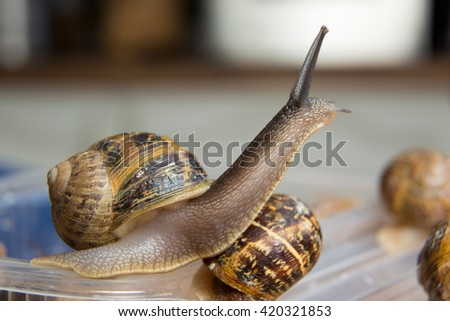 Escargot - snails.