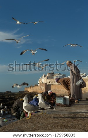 ESSAOUIRA, MOROCCO - APRIL 25: Workers gutting fish outside the market whilst sea gulls hover above on April 25, 2013 in Essaouira, Morocco.