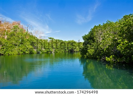 Estuary in the mangroves. - stock photo