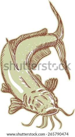 Etching engraving handmade style illustration of a ray-finned fish catfish also known as mud cat, polliwogs or chucklehead diving set on isolated background.  - stock photo