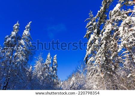Eternal Frozen Winter  - stock photo
