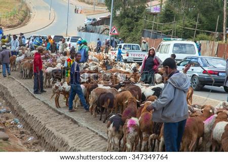 Ethiopia,Addis Ababa, January 5,2014. Animal market on the eve of a religious celebration in Ethiopia, Addis Ababa, January, 2014. - stock photo