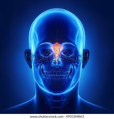 ethmoid bone stock images, royalty-free images & vectors, Sphenoid