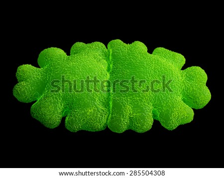 Euastrum oblongum desmid green alga. Desmids are a common group of freshwater single-celled algae that have intricate cell walls - stock photo