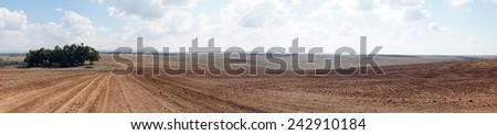 Eucaliptus grove and plowed land                                - stock photo