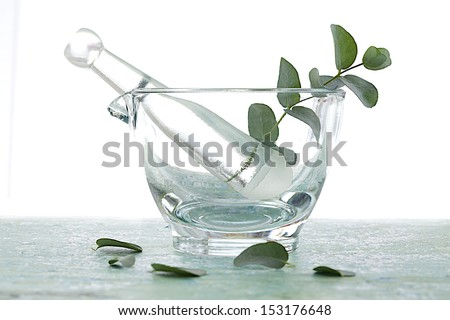 Eucalyptus leaves in glass mortar - stock photo