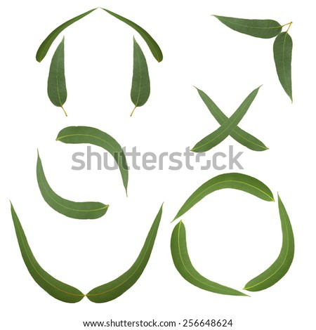 Eucalyptus leaves in the form of symbols and frames - stock photo