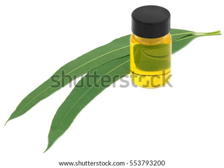 Eucalyptus Oil with leaves over white background