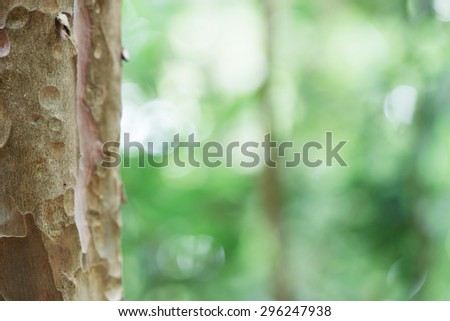 Eucalyptus tree trunk closeup.Green leaves background. Beautiful autumn morning in the forest. Vintage retro effect style pictures. Blur bokeh background. - stock photo
