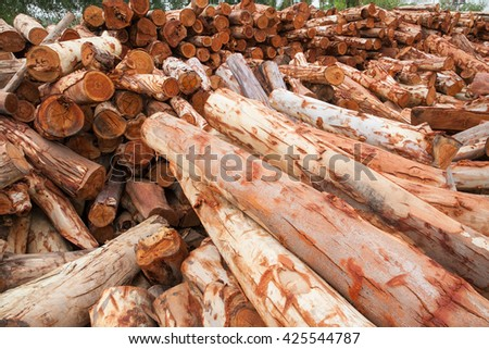 Both Sides Of A Sle Plank White Gum Aka Broad Leaved Kindling Bark Eucalyptus Dalrympleana Huge Enlargements Are