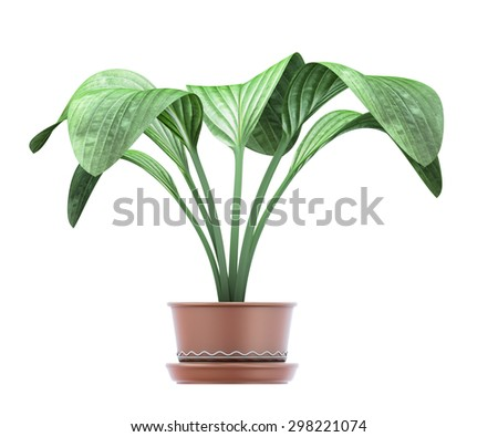 Euharis in a pot on a white background. Indoor plant. Room flower in a pot clipping path. 3d illustration. - stock photo