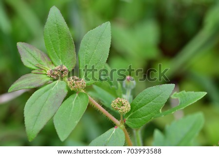 euphorbia stock images royalty free images amp vectors