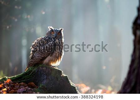Eurasian Eagle Owl (Bubo Bubo) sitting on the stump, wildlife photo. - stock photo