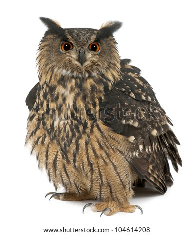Eurasian Eagle-Owl, Bubo bubo, 15 years old, standing against white background - stock photo