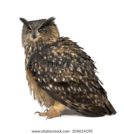 Eurasian Eagle-Owl, Bubo bubo, 15 years old, standing with eyes closed against white background - stock photo