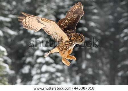 Eurasian Eagle owl, flying bird with open wings. Owl with snow flake in snowy forest during cold winter. Eagle owl in the nature habitat, France. Action snowy scene with owl in forest. Flying bird. - stock photo