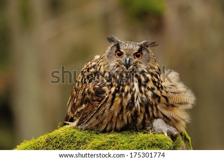 Eurasian Eagle Owl holding mouse as prey on moss rock - stock photo