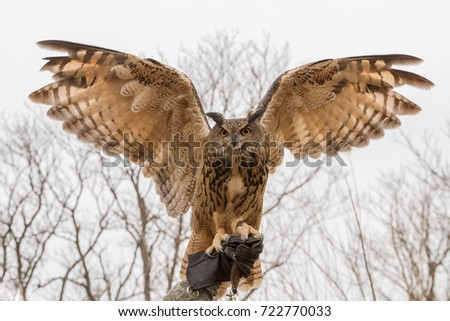 owl with wings spread stock images, royalty-free images & vectors